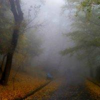 Осенний терренкур........... :: Юрий Цыплятников