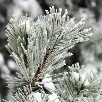 Зима. :: Liudmila LLF