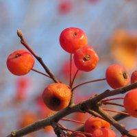 райские яблочки :: НАТАЛЬЯ