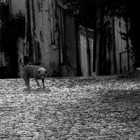 Пес, который гуляет сам по себе :: Tanja Gerster