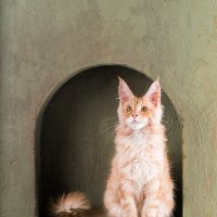 Котик в нише :: Светлана Л.