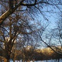 Начало зимы.. :: Зинаида