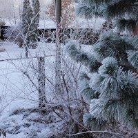 Зимние сюжеты :: Екатерина Торганская