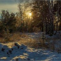 Первый день зимы № 2 :: Андрей Дворников