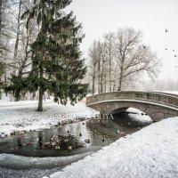 Утки зимой :: Юлия Батурина