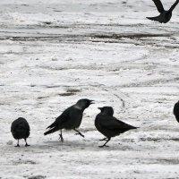 Из жизни птиц! :: Валентина  Нефёдова