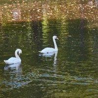 Лебеди :: Натали Зимина