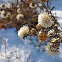 Букетики зимы :: Екатерина Торганская