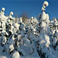 Холода не страшны :: Leonid Rutov