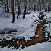 лесной ручей :: Владимир