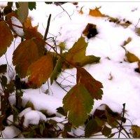 Первый снег :: Людмила