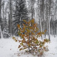 ранний снег :: Евгений Гузов