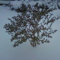 Цветы и снег :: Dana