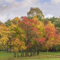 Такой красивой была осень :: bajguz igor
