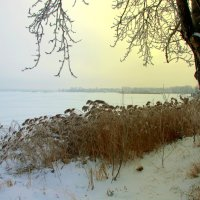 Уж реже солнышко блистало... :: Нэля Лысенко