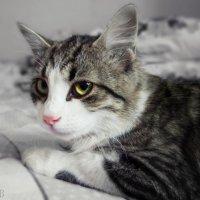 А кошка - только кошка! :: Людмила Богданова (Скачко)