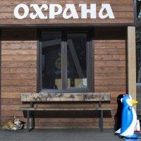 Серьезная охрана... :: Елена Иванова