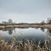Озеро Ольховое :: Андрей Мохов