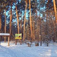Берегите лес - народное достояние! :: Елена (Elena Fly) Хайдукова