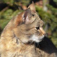 Степной кот... :: Наташа *****