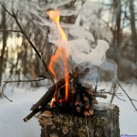 Погреться у лесного костерка.. :: Андрей Заломленков
