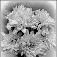 Пять белых хризантем :: Сергей Карачин
