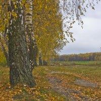 Даже поздняя  осень бывает прекрасна :: Ольга Винницкая (Olenka)
