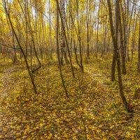 Осень на болоте :: Владимир Жданов