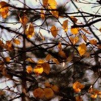 Осенний лист :: Жанна