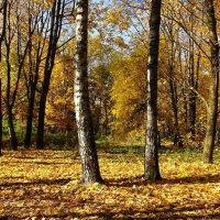 Золотая осень :: Милешкин Владимир Алексеевич