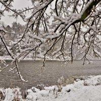 Сквозь снежный узор веток ... :: Ольга Винницкая (Olenka)