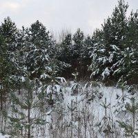 В зимнем лесу :: Вадим *