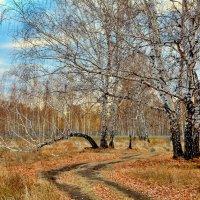 Дорогами осенними :: Mikhail Irtyshskiy