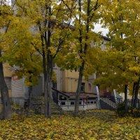 Золотистая осень :: gribushko грибушко Николай