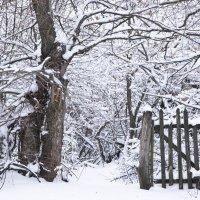 В снежное  королевство... :: Елена Иванова