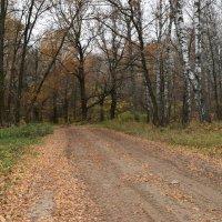Осень на лесной дороге... :: Вадим *