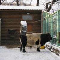 В зоопарке. :: ТАТЬЯНА (tatik)