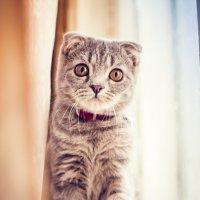 Милый котик у окошка :: Вероника Алатырева