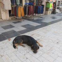 Датча,Турция :: Елена Шаламова
