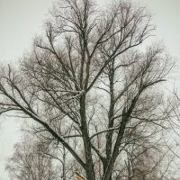 пейзаж с большим деревом :: павел бритшев