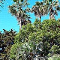 Испания. Каталония. В Ботаническом саду. :: Владимир Драгунский