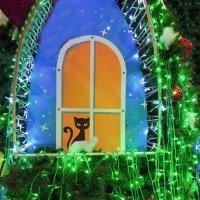 Новый год ждёт даже кот... ) :: Тамара Бедай