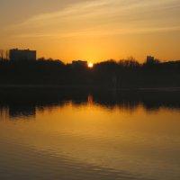 В оранжево-чёрных тонах :: Дмитрий Никитин