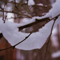 Рукоделие зимы :: san05 -  Александр Савицкий