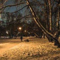 В Зимнем Парке :: юрий поляков