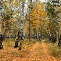 Осень в смешанном лесу :: Mikhail Irtyshskiy