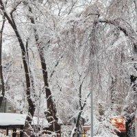 деревья в снегу :: tina kulikowa