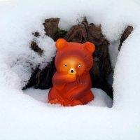 Тихо в лесу, только не спит медведь..:-) :: Андрей Заломленков