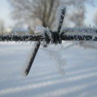 необычный декабрь :: Алексей Кузнецов