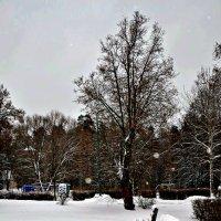 Декабрь... :: Михаил Столяров
